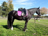 Kifra-pad Square Dark Pink _