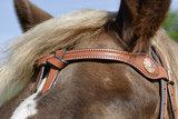 Western Hoofdstel Aspy   2 kleuren  _